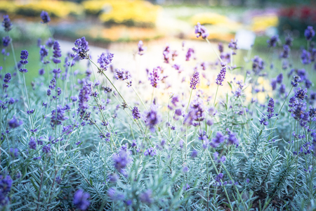 Beautiful purple flowers in the garden, background photos, nature photos