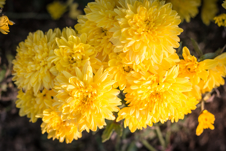 Beautiful yellow flowers in the garden, background photos, nature photos Imagens