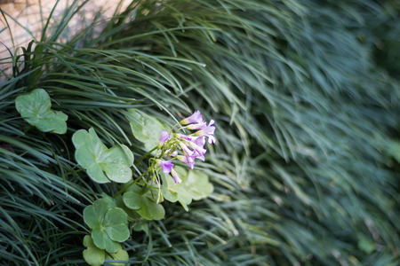 Green grass and purple flower on the floor, grass background, natural abstract image Imagens