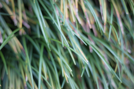 Green grass on the floor, grass background, natural abstract image Imagens