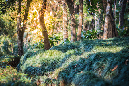 Green grass cover up forest cover, background photo