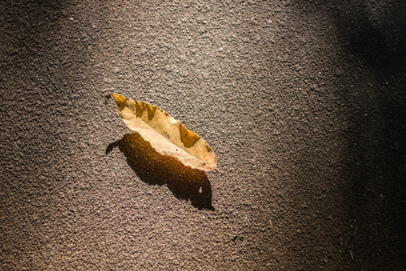 Dry leaves on the street, abstract photos, background images