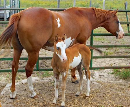 Farm horses in Nebraska