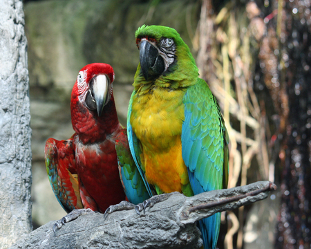 Parrots at Moody Gardens in Texas