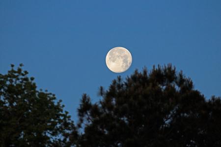 Full Moon Setting in the Morning Reklamní fotografie