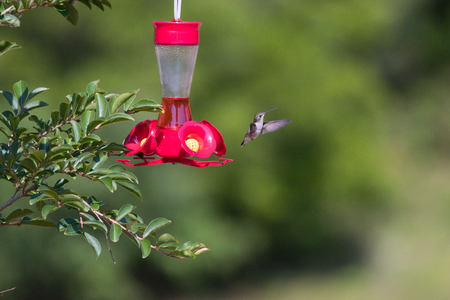 Hummingbird at a feeder 写真素材