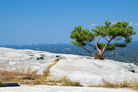 A tree on top of Stone Mountain