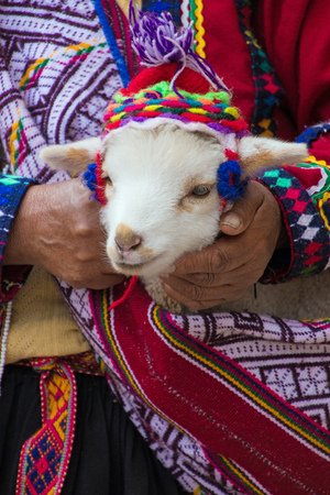 Baby animal in Peru