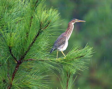 Birds of North Carolina Banco de Imagens