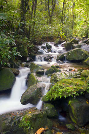 El Yunque river stream Puerto Rico.   Stock Photo - 9304237