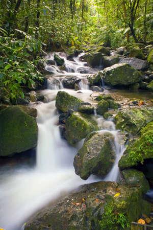 El Yunque river stream Puerto Rico.   photo