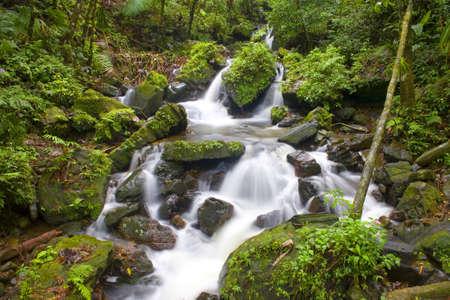 El Yunque river stream Puerto Rico.   Stock Photo