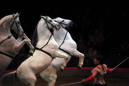 NEW YORK, NEW YORK - NOVEMBER 15: Horses perform with trainer  during Big Apple Circus show.  Taken November 15, 2007 in New York City.