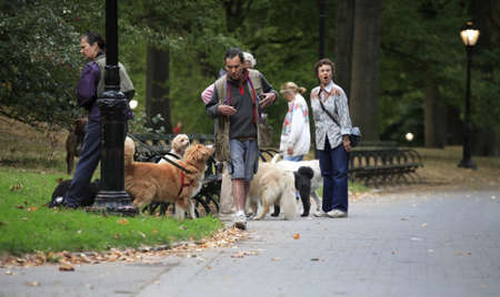 NEW YORK, NY - October 29:  Early morning dog walkers in Central Park.  Photographed October 29, 2007 in NYC. Stock Photo - 13257889