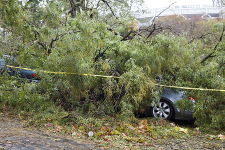 BRONX, NY - October 30: Tree collapsed and damaged autos in Jerome section of the Bronx after hurricane Sandy passed through the Northeast the evening before.  Photographed October 30, 2012 in New York.