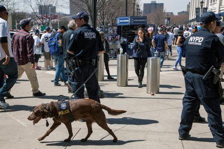 BRONX, NEW YORK, USA - APRIL 10:  NYPD Counter-terrorism Bureau K-9 officers during opening day at Yankee Stadium.  Taken April 10, 2017 in New York.