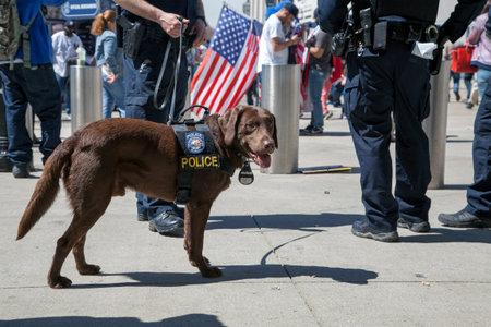 BRONX, NEW YORK, USA - APRIL 10:  NYPDCounter-terrorism Bureau K-9 dog during opening day at Yankee Stadium.  Taken April 10, 2017 in New York. Redakční