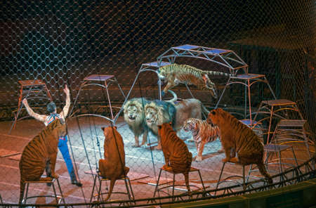 BROOKLYN, NEW YORK - MARCH 14: Alexander Lacey performs with animals during Ringling Bros show.  Taken March 14, 2017 in New York.