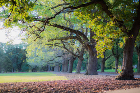 victoria park: Fawkner Park in Melbourne
