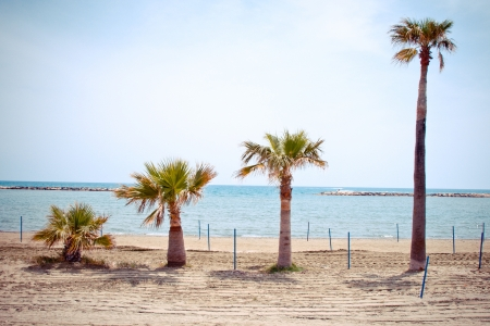 4 palm trees growing in a scale on Larnaca beach, Cyprus