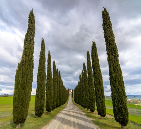PIENZA, ITALY - January 25, 2015: day view of tuscan landscape with typical cypress alley near Pienza, Italy.  Stock Photo