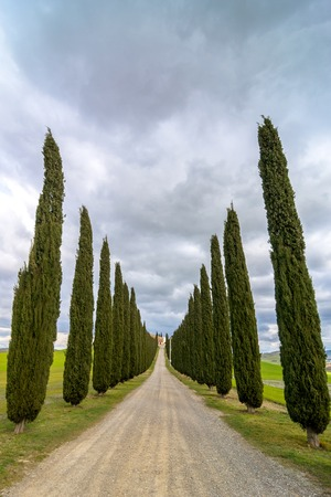 PIENZA, ITALY - January 25, 2015: day view of tuscan landscape with typical cypress alley near Pienza, Italy.