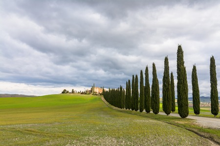 PIENZA, ITALY - January 25, 2015: day view of tuscan landscape with typical cypress alley near Pienza, Italy.  In 2004 the Val dOrcia was added to the UNESCO list of World Heritage Sites. Stock Photo