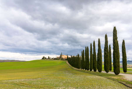 agriturismo: PIENZA, ITALY - January 25, 2015: day view of tuscan landscape with typical cypress alley near Pienza, Italy.  Stock Photo