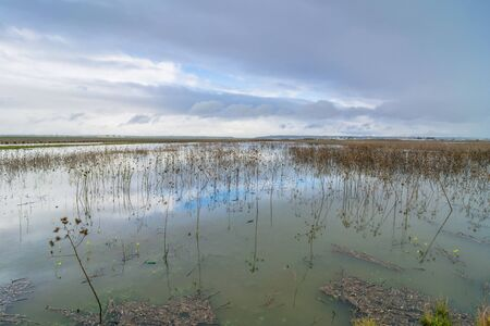TRAPANI, ITALY - FEBRUARY 22, 2014: day view of Riserva naturale integrale Saline di Trapani e Paceco in Trapani, Italy. This nature reserve is the habitat of many endemic plant species.