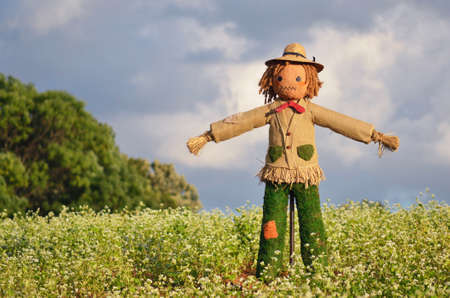 autumn scarecrow: Scarecrow strawman made to guard the fields