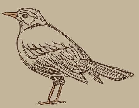 Vogel Skizze Standard-Bild - 26134533