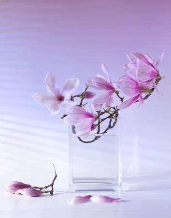Beautiful magnolia flowers on the table in the vase light from the window through the blinds gradation color shadow on the wall