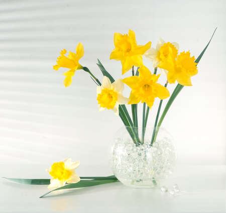 Beautiful flowers daffodils yellow and white on the table in the vase light from the window through the blinds gradation color shadow on the wall Standard-Bild