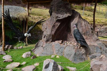 sacred valley of the incas: Fake Condor Sacred Valley of the Incas