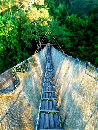 red: Puente colgante sobre la selva amaz�nica Foto de archivo