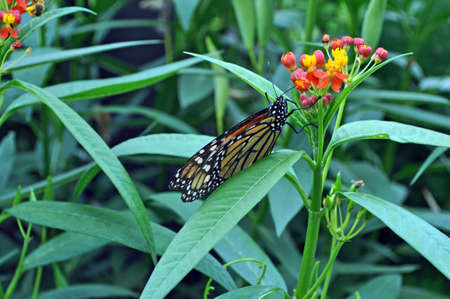 Butterfly perched on green plant with colorful flowers