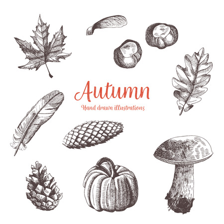 Autumn vintage hand drawn collection. Illustration of leaves, mushroom, pumkin, cones, feather and chestnuts. Botanical vector drawings. Thanksgiving.