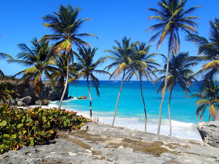 Beach with rocks and palm in Barbados