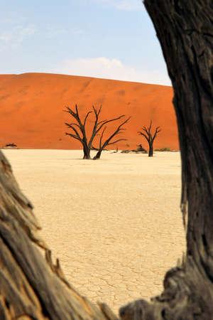 Death Vlei - Sossusvlei - Namibia Africa