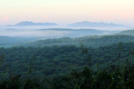 Morning mood with fog - Borneo Malaysia Asia