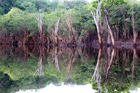 Beautiful reflection of trees in the river - Rio Negro, Amazon, Brazil, South America