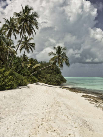 Beach with palm trees - Kuramathi Maldives Archivio Fotografico