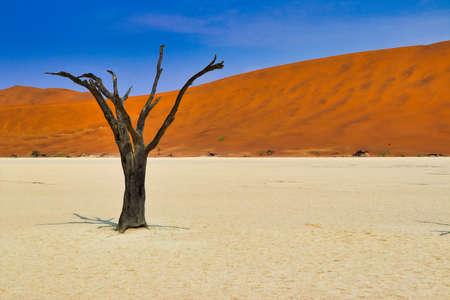 Dead Vlei (Namib-Naukluft Park) - Namibia Africa
