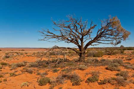 australian outback: the australian landscape, south australia Stock Photo