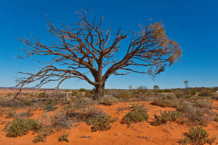 the australian landscape, south australia Stock Photo - 8169335