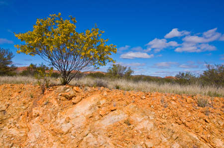 australian scenic: bush and road on the outback, northern territory australia