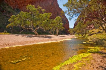 desert pond in the red center desert, northern territory australia