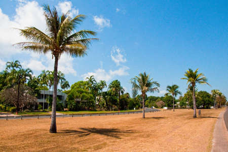 palms along the coast in Darwin, Australia