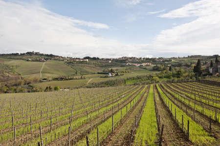 farmland and countryside in Chianti, Tuscany, Italy photo
