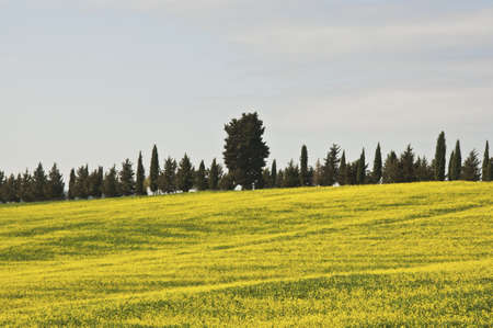 countryside in Chianti, Tuscany, Italy Banco de Imagens